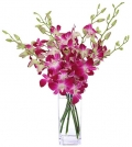 send orchids in manila city philippines