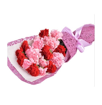 8 Red Carnations and 8 Pink Carnations Send to Manila Philippines