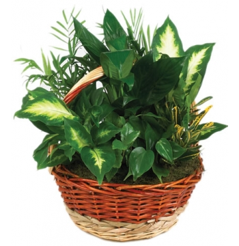 Full Green Garden Basket