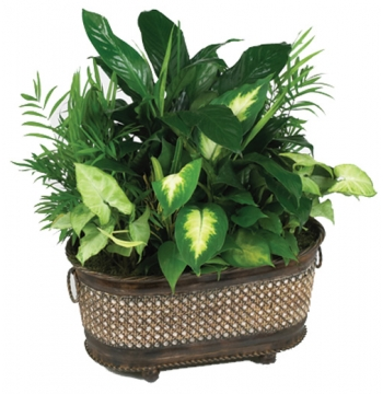 Green Planter in Basket